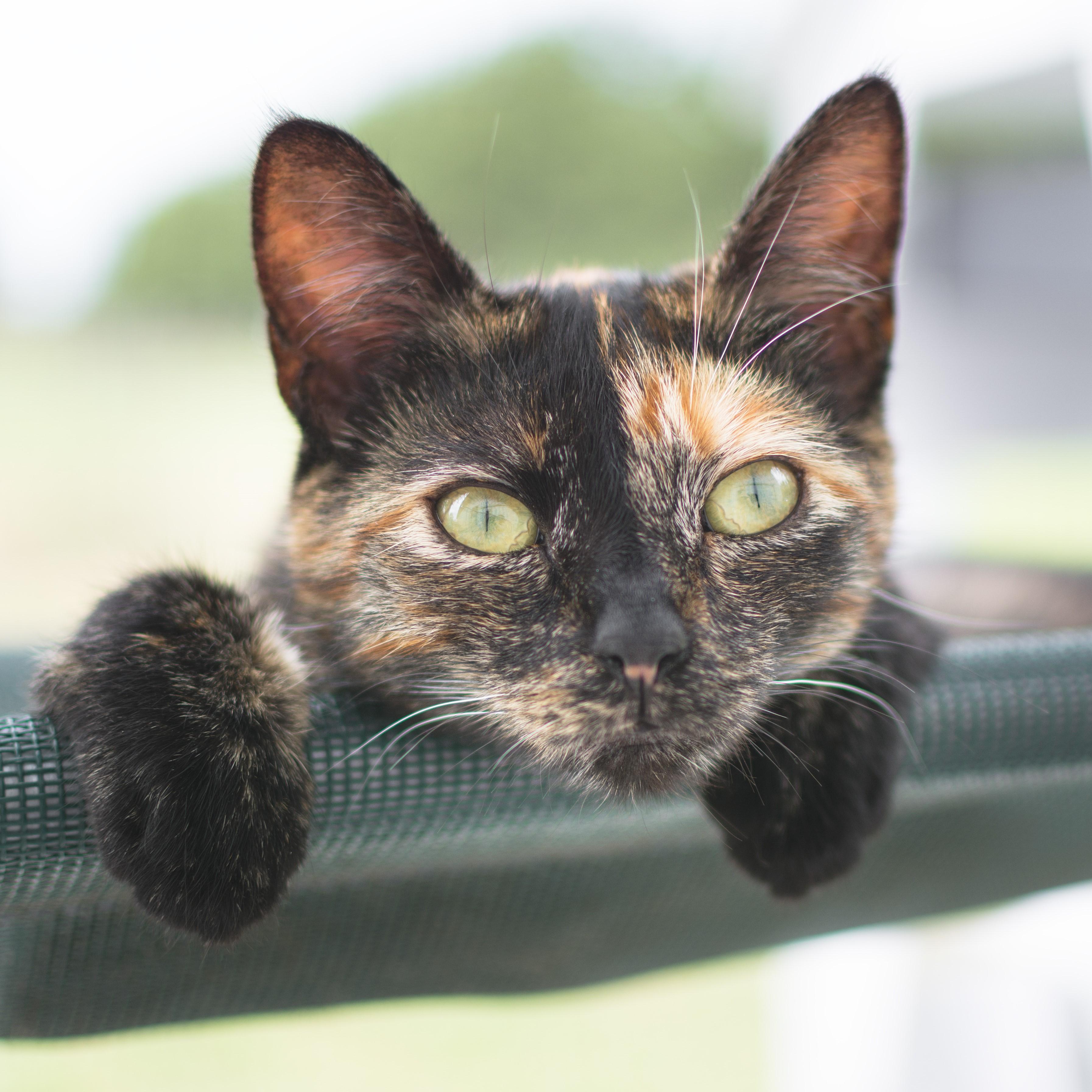 Cat Adotpions