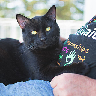 Volunteer  with cat at Animal Aid