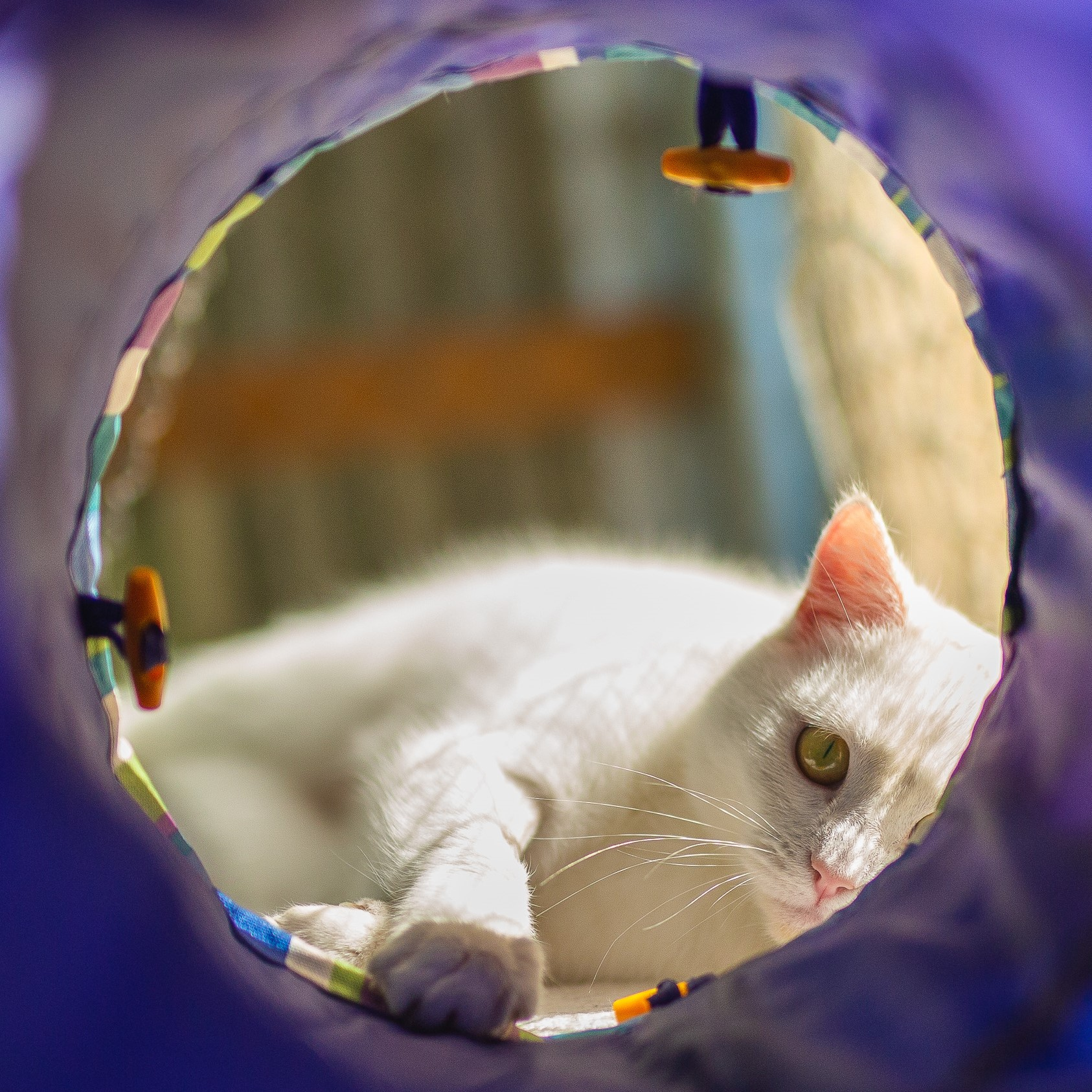 Cat with tunnel