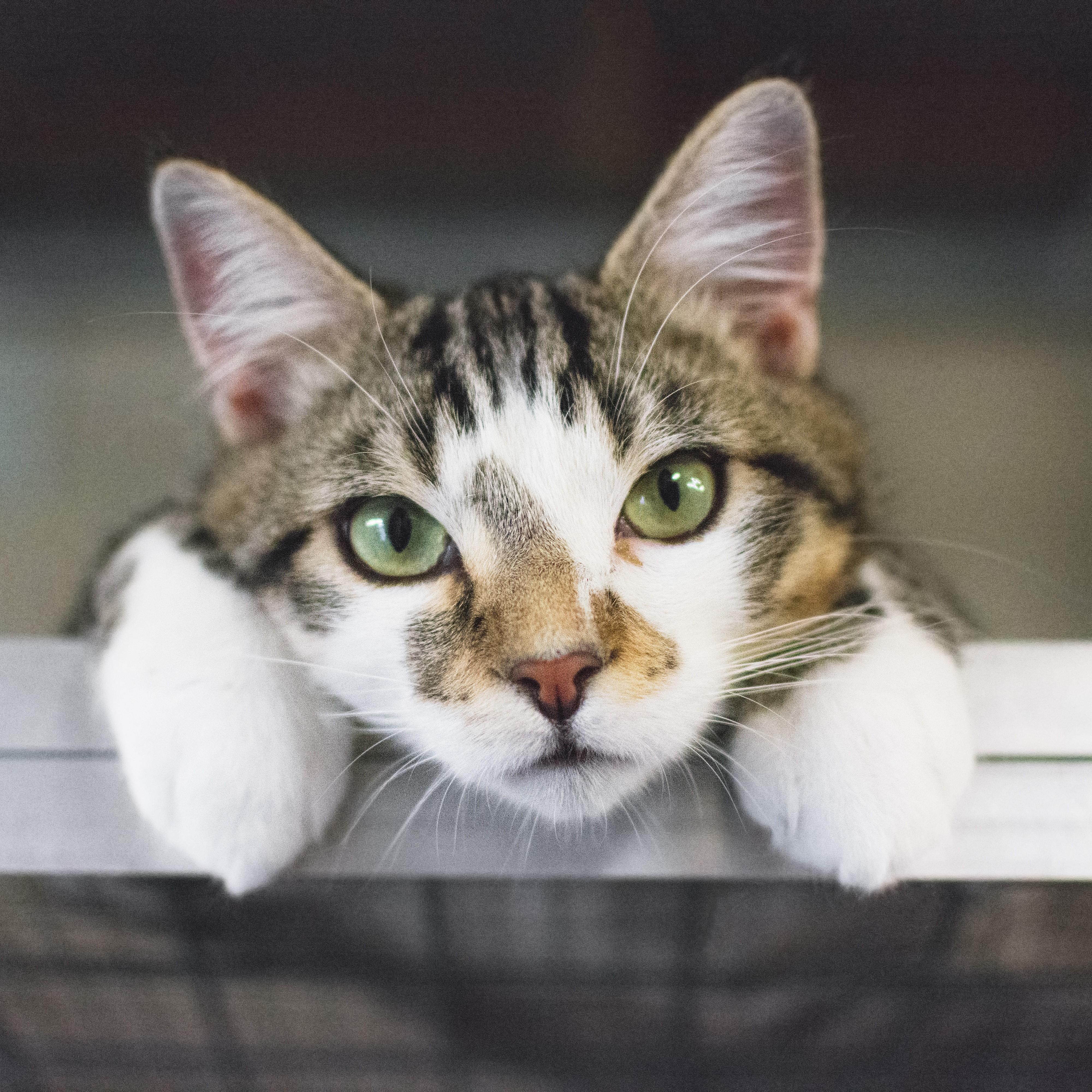 Cat at Animal Aid